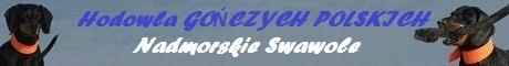 GOŃCZY POLSKI hodowla NADMORSKIE SWAWOLE